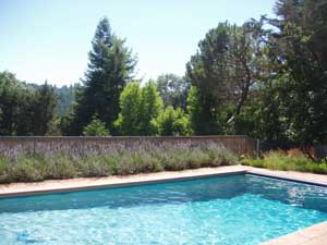 Lavendar and 40 x 20' heated pool.Pool
